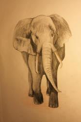 Elephant by Gluzzbung