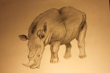 Rhino by Gluzzbung