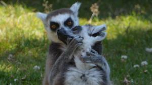 Lemur Of Steel. by Rabid-Coot