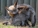 Foxy Kisses. by Rabid-Coot