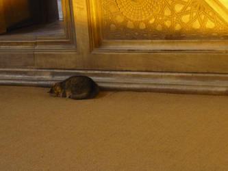Cat in the Aya Sophia, Istanbul by HedgehogTiger