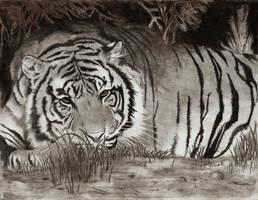 Sleepy Tiger by cjc7664