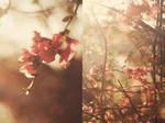 spring by aimeelikestotakepics