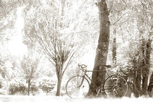 bike in wonderland by aimeelikestotakepics