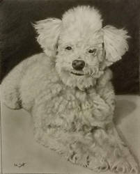 Commission 11x14 graphite by timscottart