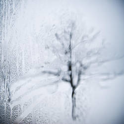 A Cold Impression by DominikKucera