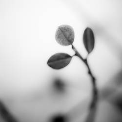 Spring On Earth by DominikKucera