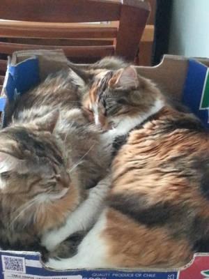 pretty kittys by ravincat101