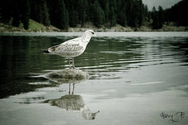 Standing on the lake by hordel