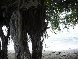 Roots - Unrestricted by Cat-in-the-Stock