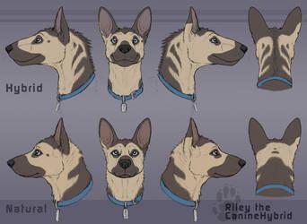 [Ref] Hybrid Riley: Headshot Turnaround by CanineHybrid