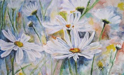 daisies by n-11