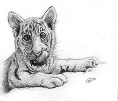 Tiger Cub by AriellaMay