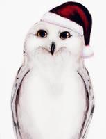 Snowey Christmas Owl by IsaiahStephens
