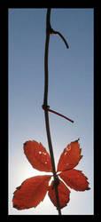 Sunkist Leaves 1 by petemc