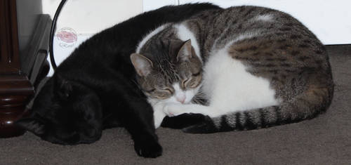 Sleeping Sisters by blackstarlight17