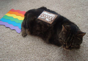 Real Life Nyan Cat by Beccaxz