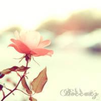 Flower by Beccaxz