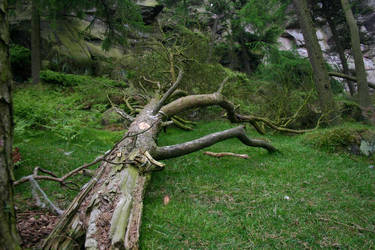 The Broken Branch by jamieoliver22