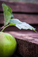 Apple Leaf by jamieoliver22