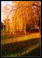 Autumn 1 by SKaRTeH