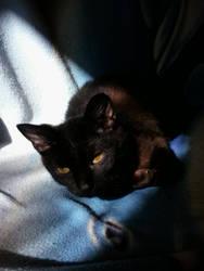 CAT_2 by Isztar89