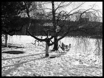 Plaisirs hivernaux XX by Nuclea