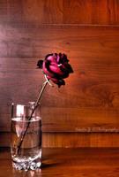 A Piece of Love by deathly-stillness