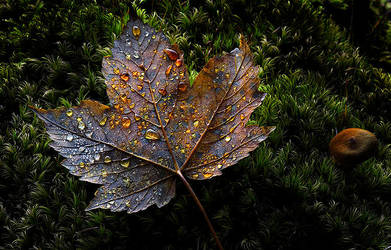 Autumn Ethereal -IV- by alexandre-deschaumes