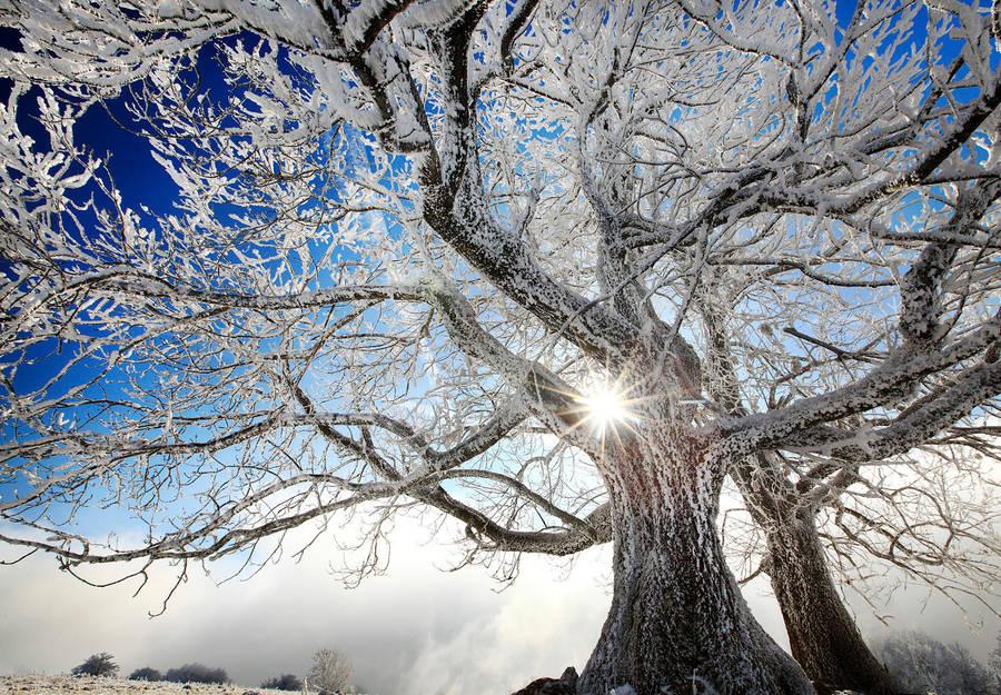 frozen Claws of Winter by alexandre-deschaumes