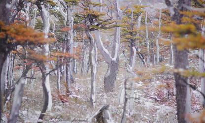 Silent Forest by alexandre-deschaumes