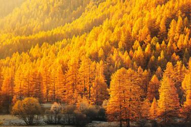 The Golden Vale by alexandre-deschaumes