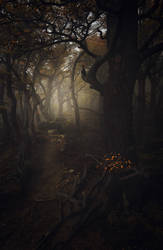 Enter   Forest of Souls by alexandre-deschaumes