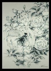 white roses by tony2105