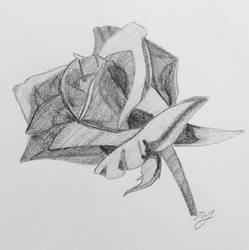 My Rose To You by ShadowDrift047