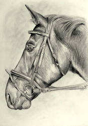 Don Horse Drawing by DelicatArt