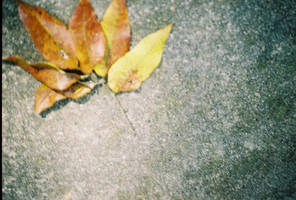 Leaf and cement by VeganInFurs