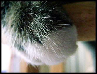 Cats Paw by XxBrokenxXxArtxX