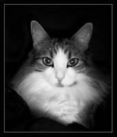 Portrait of a Cat by XxBrokenxXxArtxX