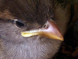 Baby Bird by T-Thomas