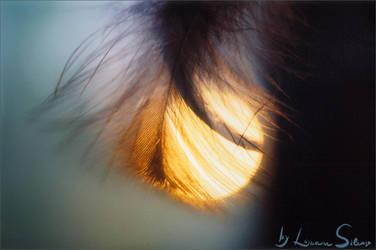 Feathered Sun by luana