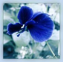 Velvet Blue by luana