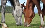 Companionship by Bea-Horses