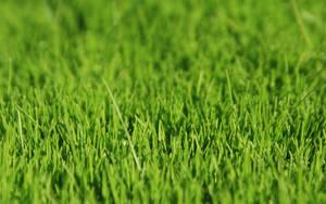 dimage vista grass by dimage
