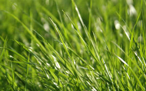 dimage Vista Grass 1 by dimage