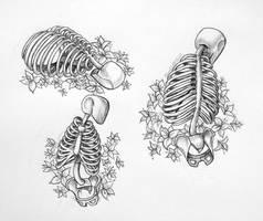 rib cage study by RavenDANIELS