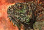 Iguana Sketch Card ACEO by Stungeon