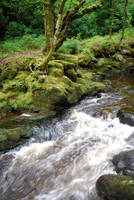 Forest Stream 2 by CompassLogicStock