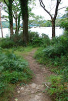 Green Forest Path by CompassLogicStock
