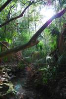 Jungle Creek by CompassLogicStock